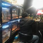 Yatonokami - бар с рептилиями